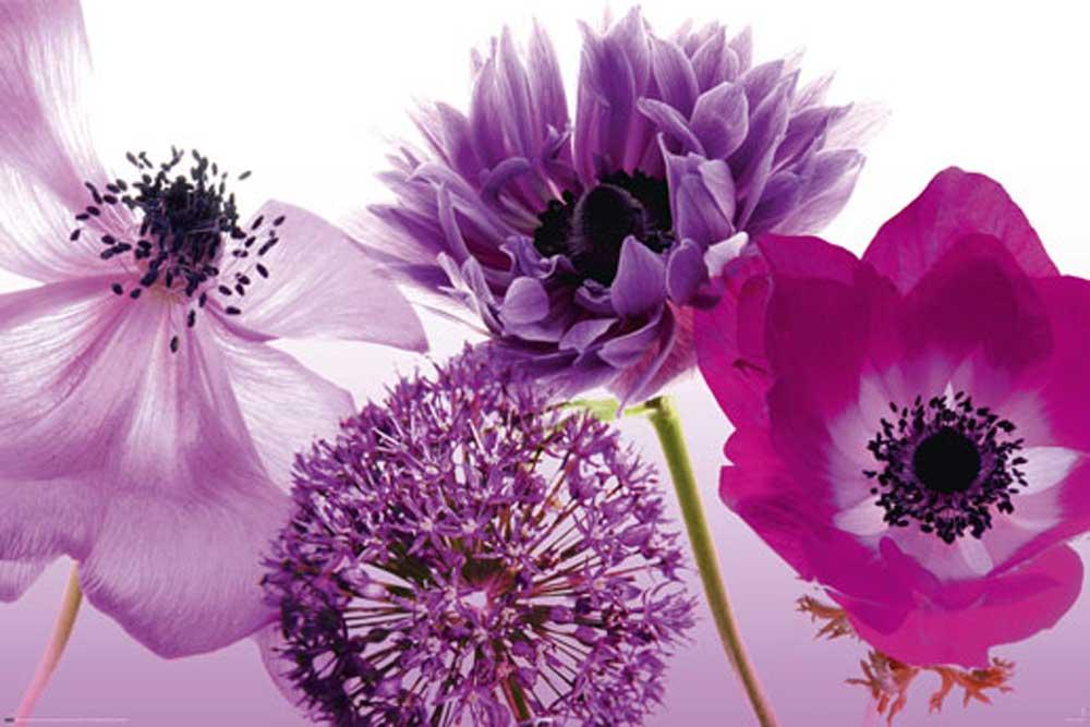 Постер цветы