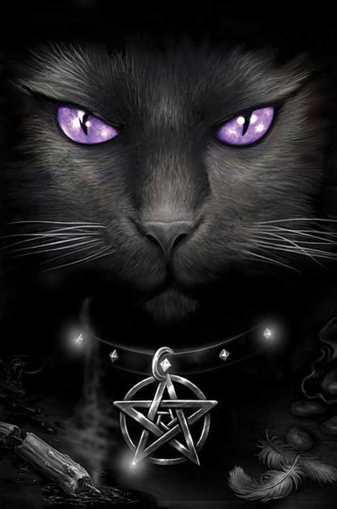 Spiral Magical Cat Poster 61x91 5