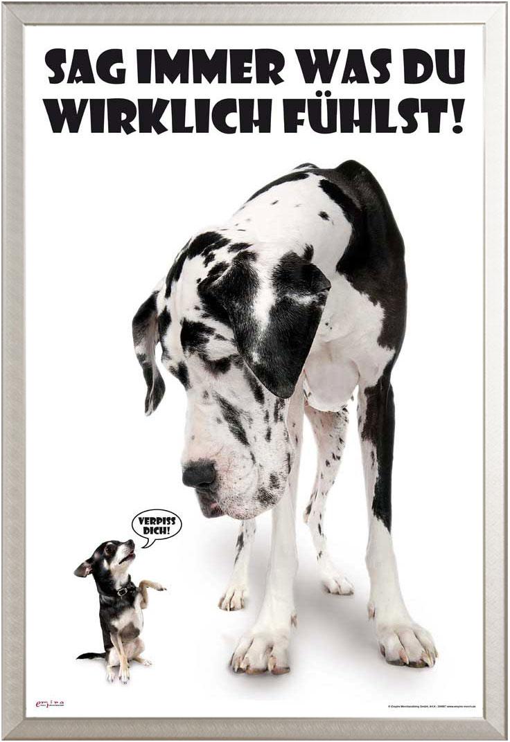 Größe 61x91,5 cm Sag immer was du fühlst Dogs Poster Druck Hunde