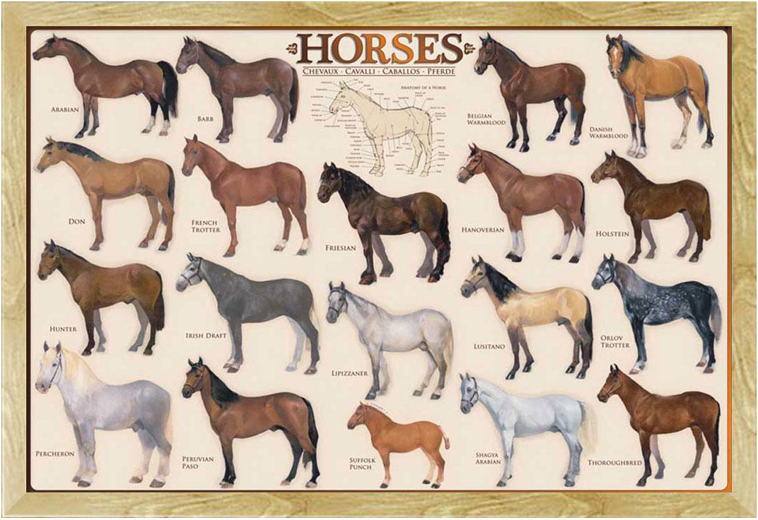 Poster Druck Größe 91,5x61 cm Bildung Horses Pferde Educational
