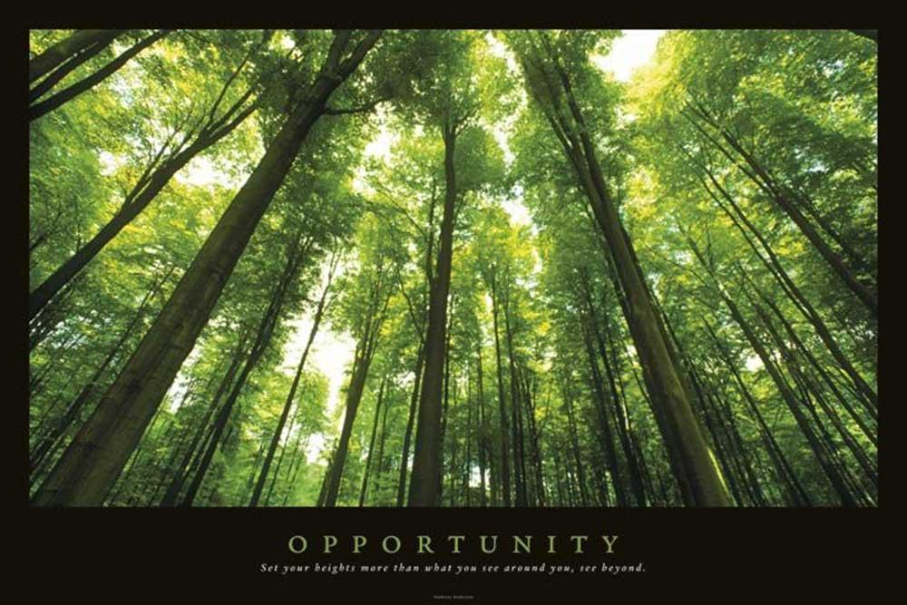 motivational opportunity wald forrests poster 91 5x61. Black Bedroom Furniture Sets. Home Design Ideas