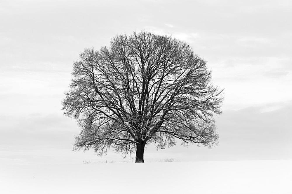 Baum schwarz weiss foto tapete 232x315 foto tapeten for Tapete baum
