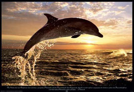 Poster - Dolphins