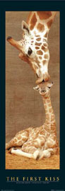 Poster - Giraffes First Kiss