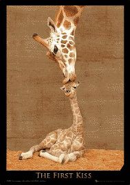 Giraffes First Kiss 3D