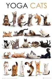 Poster - Cats