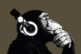 The Chimp Stereo
