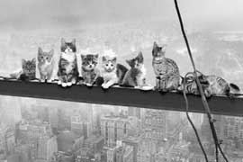 Poster - Cats On Girder
