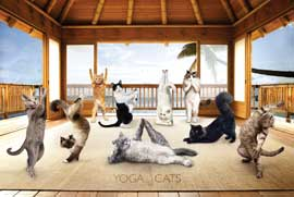 Poster - Yoga Cats Hut