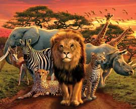 Poster - African Kingdom Animals