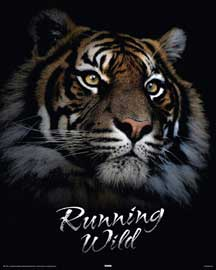 Poster - Raubkatzen Tiger - Running Wild Version 2