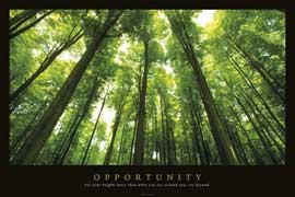 Poster - Motivational Opportunity Wald Forrests