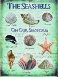 Poster - Beach The Seashells