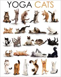 Poster - Yoga Cats