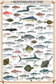 Poster - Educational Mediterranean Fish