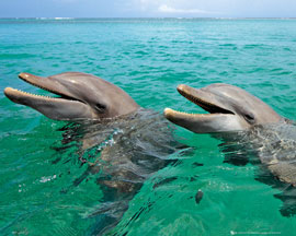 Dolphins Laughing