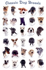 Poster - Hunde Classic Dog Breeds