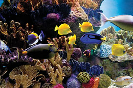 Sea Life Tropical Fish & Coral