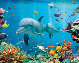 Poster - Dolphins Tropical - Ocean