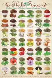 Küche - Reis und Gewürze - Mini-Poster - 40x50