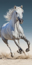 Poster - Horse
