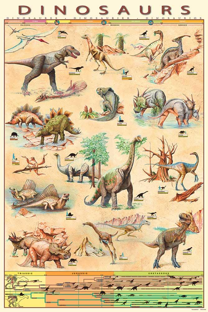 Educational - Bildung Dinosaurs Dinosaurier 5 - Poster Druck - Größe ...
