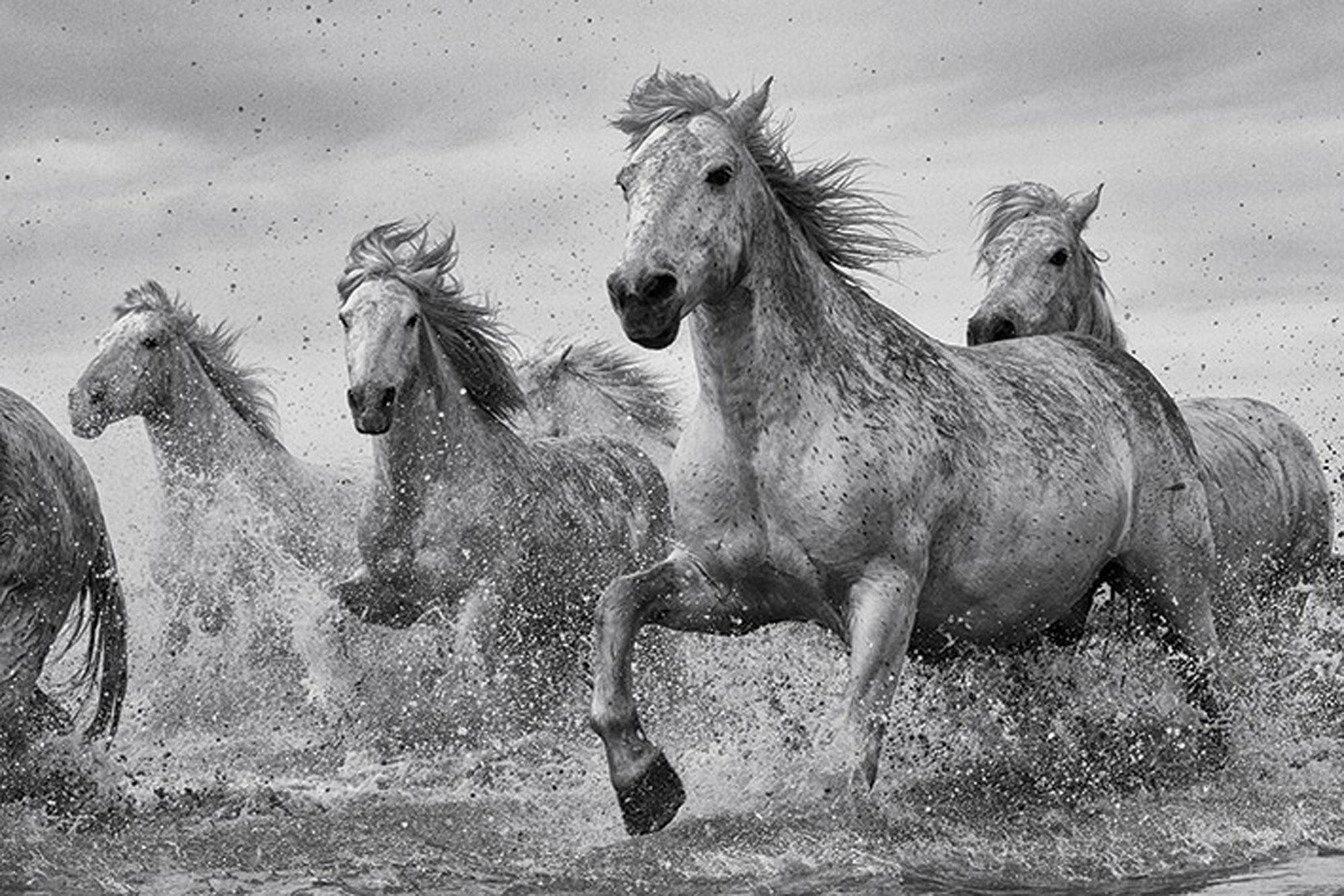 Pferde Poster