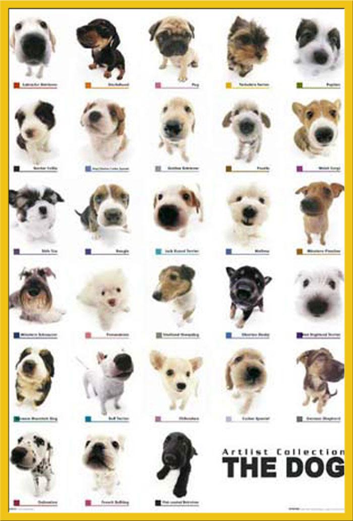 Hunde - Welpensammlung - Tier - Poster Druck - Größe 61x91,5 cm | eBay