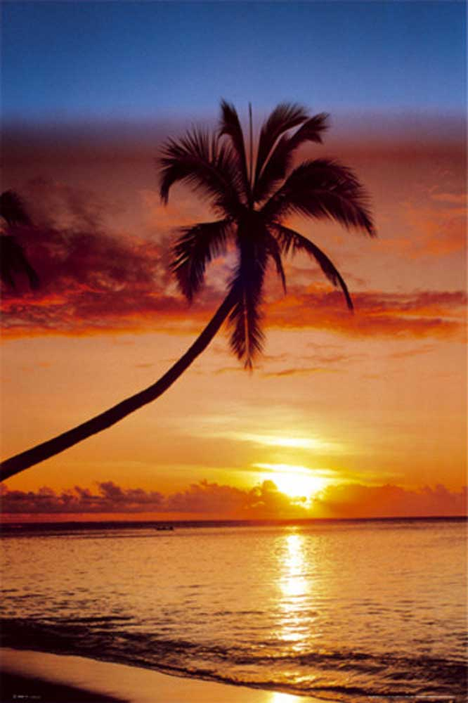 Sunsets - Poster - Palm Tree On The Beach
