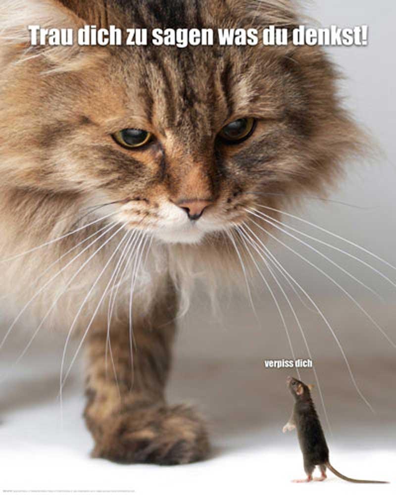trau dich was zu sagen  katze und maus  miniposter  40x50