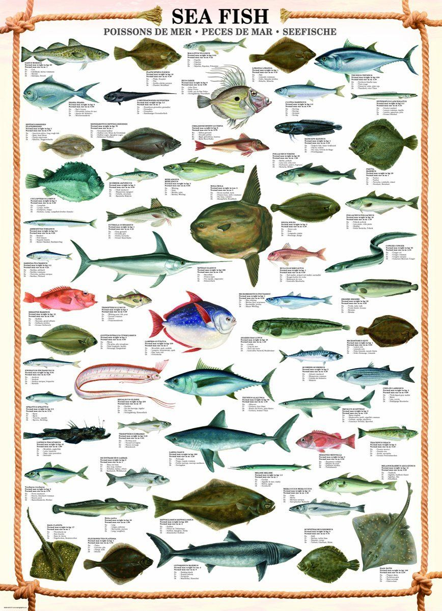 Educational - Bildung - Poster - Sea Fish