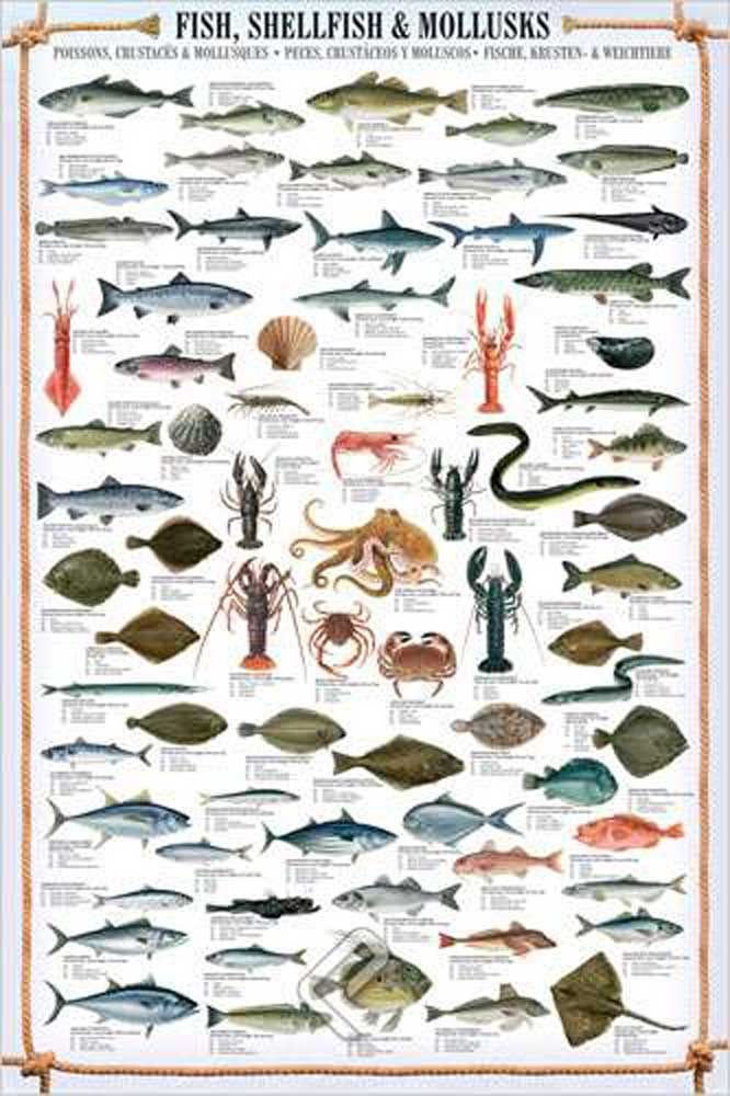 Educational - Bildung - Poster - Fish, Shellfish & Mollusks