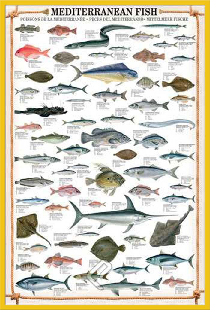 Educational mediterranean fish mittelmeer fische bildung for Gartenteichfische arten