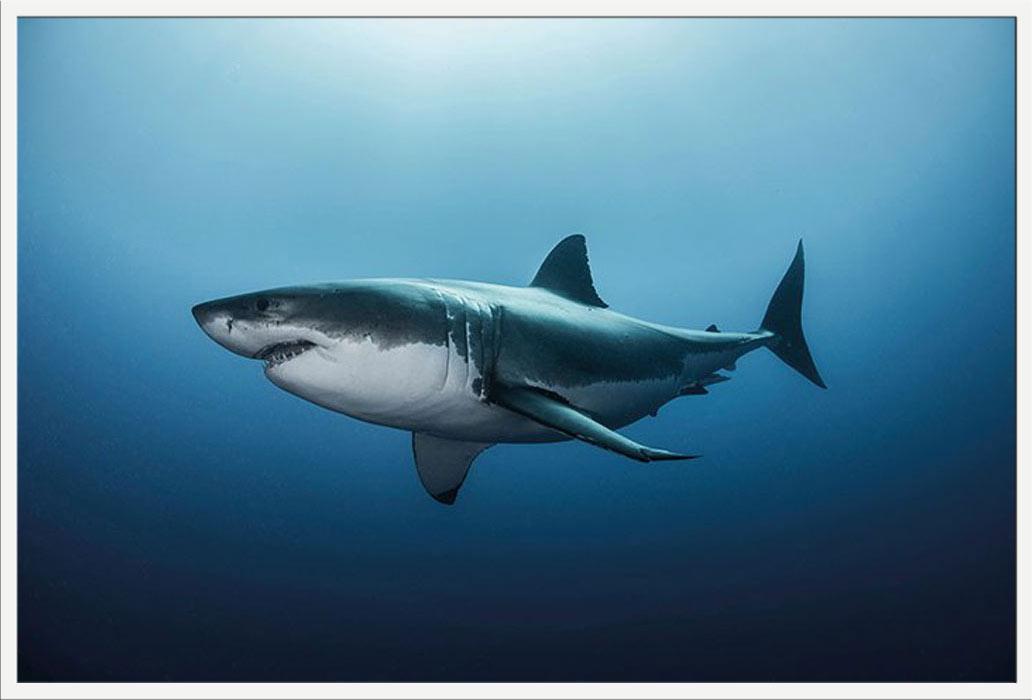 Hai Größe
