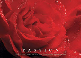 Poster - Motivational Rose, Passion