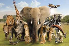 Poster - Wild Animals Group