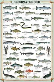 Educational - Bildung Freshwater Fish
