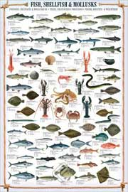 Educational - Bildung Fish, Shellfish & Mollusks