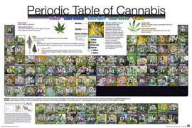 Poster - Periodic Table Cannabis