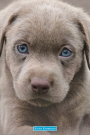 Kimberlin, Keith Puppies Blue Eyes