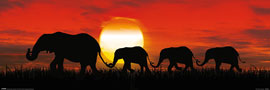 Poster - Elephants Sunset Elephants